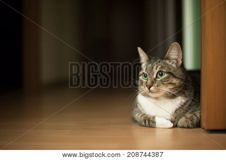 Green-eyed tabby cat sitting on the flat floor. Copy space
