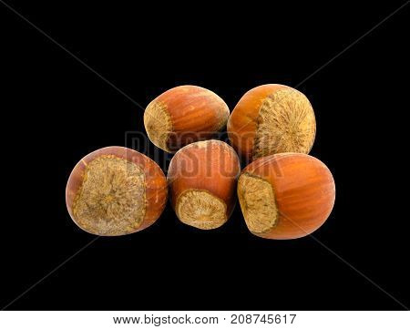 Several hazelnuts in shell isolated on black background. Photo.