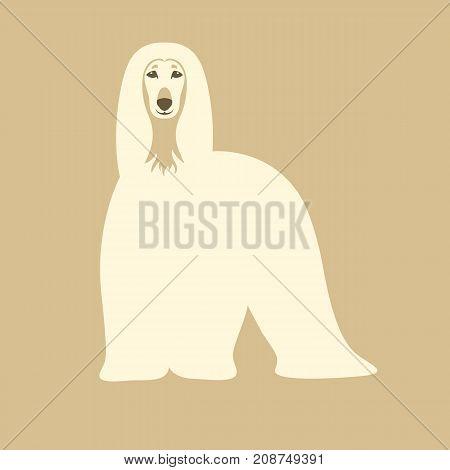 Afghan hound dog vector illustration flat style front side
