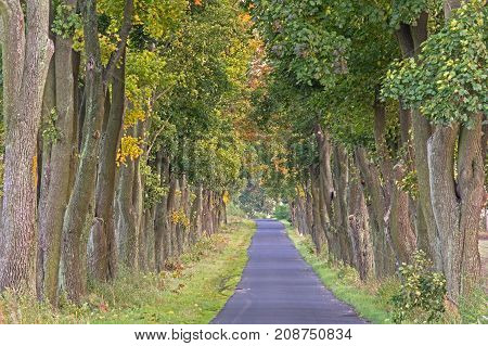 Asphalt road. It is narrow, leads through fields and meadows. On both sides of the road grow grass and tall deciduous trees. It's daytime.