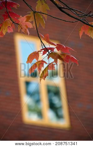 Red Leaves Infront Of A Yellow Window