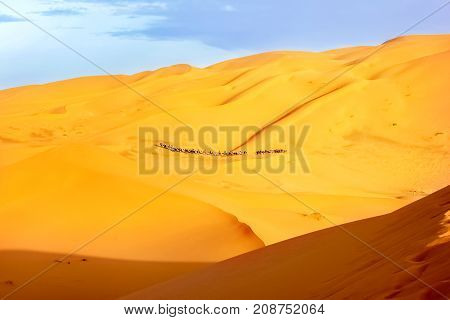 A caravan of camels among the sand dunes in the Sahara Desert. Africa. Morocco.