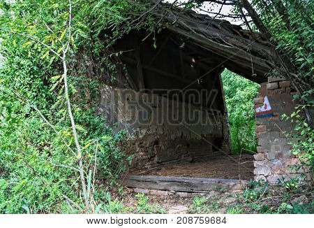 Abandoned barn surrounded by bunch of plants and trees