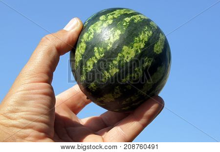 Small striped watermelon similar to a globe in a male hand against a blue sky background
