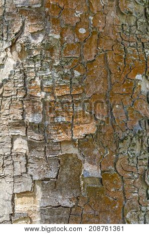 a full frame natural abstract bark detail