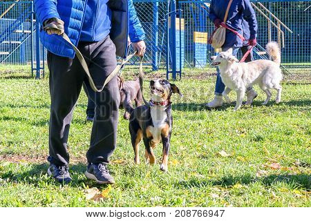 dog walking near its owner's legs during the dog obedience course