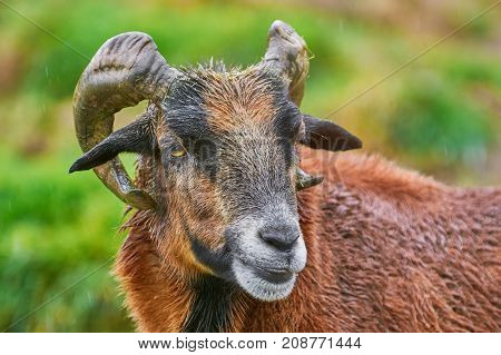 Portret Of Ram