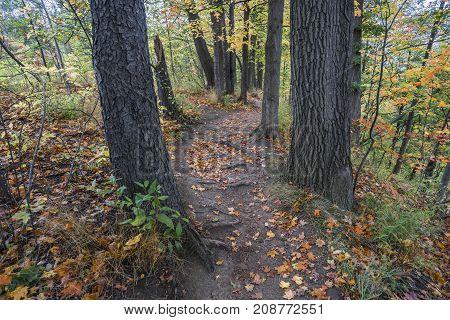 Leaf Strewn Hiking Path Winding Through Forest Of Tall Trees And Autumn Colors