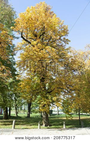 Autumn view of golden trees in Latvia's countryside.