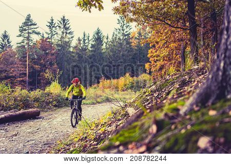 Mountain biker riding on bike in autumn or winter inspirational forest landscape. Man cycling MTB on dirty road in woods. Sport and active recreation fitness motivation and inspiration. poster