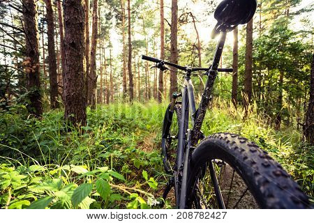 Mountain bike MTB on green summer forest trail inspirational landscape. Cycling bike on rural country trail. Sport fitness motivation and inspiration in beautiful inspirational landscape.