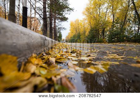 Road with fallen yellow leaves. Rainy day