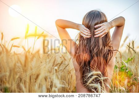 A beautiful girl in a wheat field, topless nude corrects long hair, a concept of purity. In the fresh air. Woman Brunette, femininity sexy tanned skin.
