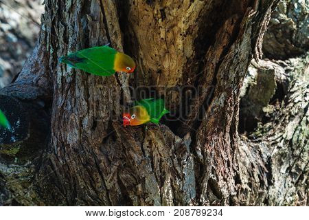 The parrots selects the nest in the hollow, Serengeti, Tanzania
