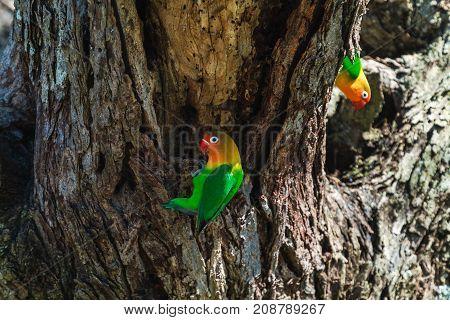Two lorikeet near the nest. Tanzania, Africa