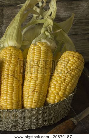 View of the ripped and ripe cob of corn