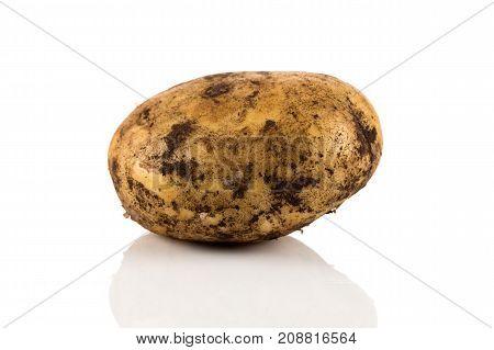 Dirty Potato Isolated On White Background.
