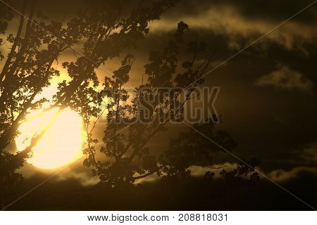 Sun setting behind branches and puffy clouds