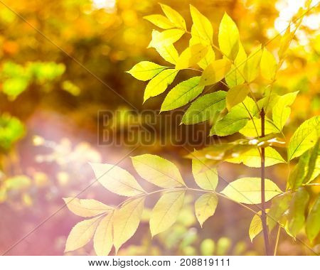 Yellow-green foliage on the foreground. Background is blurred. Autumn composition