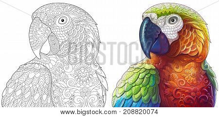 Collection of two macaw parrots - monochrome and colored versions. Freehand sketch drawing for adult antistress coloring book with doodle and zentangle elements.