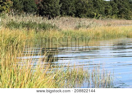 Trees and tall sea grass growing at the water line of a calm inlet.