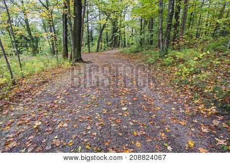 Wide Leaf Covered Path Through An Autum Forest