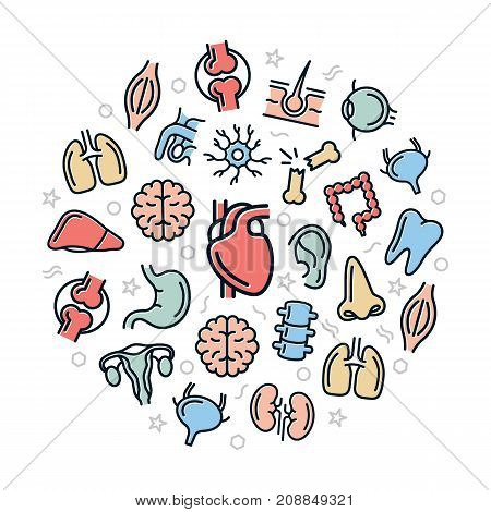 Vector organs and anatomy colored icons in circle design concept. Illustration for presentations on white background