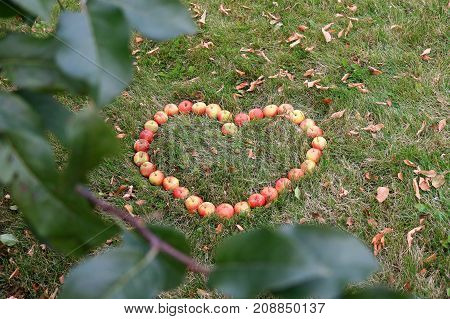 Crabapples placed in a heart shape in the grass framed by apple tree leaves