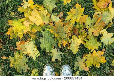 Two feet stepping on dry yellow maple leaves.