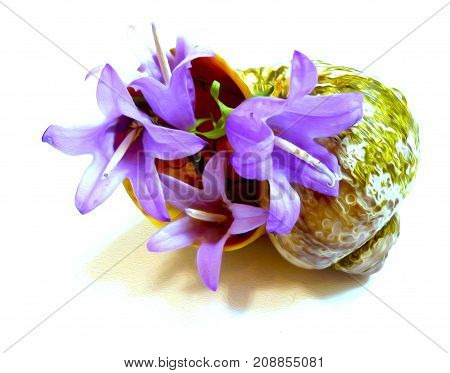 Drawing Of A Purple Flower Bell In An Old Ragged Seashell