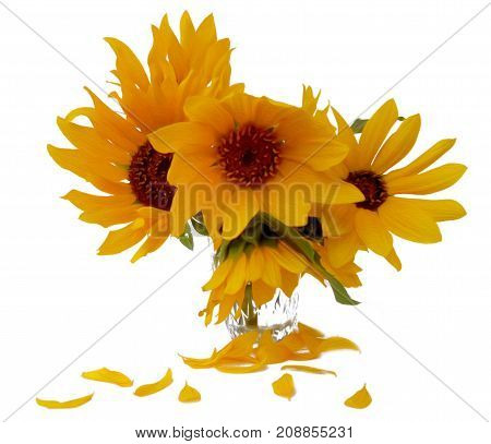 Sunflower Flower In Small Clear Glass Isolated On White Digital Painting