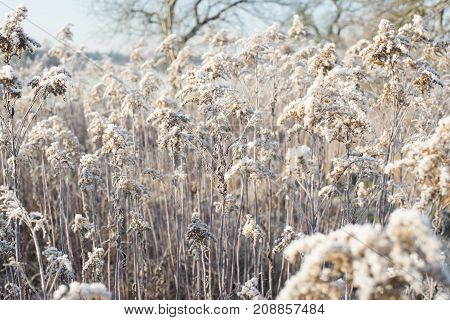 Ice cold fields in the winter in middle europa