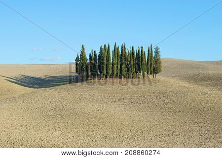 Cypress grove in the middle of a plowed field. Tuscany, Italy
