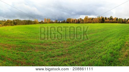 Panorama. Autumn on the fields of Europe shoots of winter wheat, blue sky and colorful leaves on trees