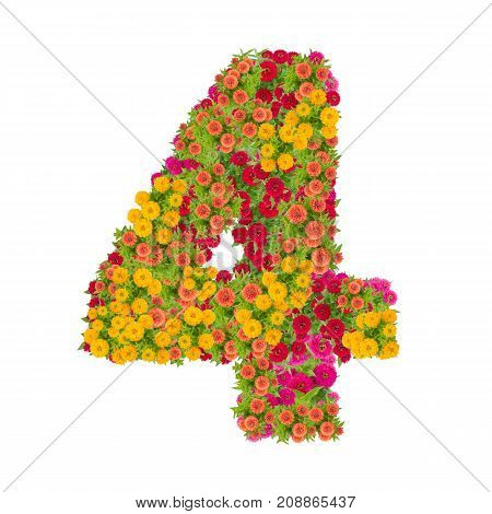 number 4 made from Zinnias flowers isolated on white background.Colorful zinnia flower put together in number four shape with clipping path