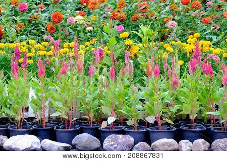 Various types of flowers in pots that are placed in the garden