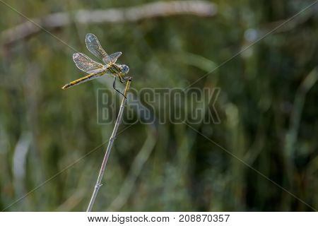 A Dragonfly Sits On A Stem