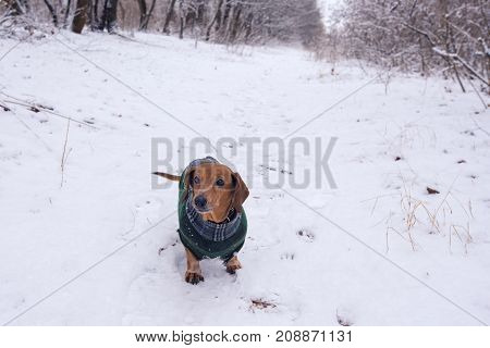 Old Funny Dog, In A Plaid Coat