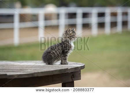 A small curious striped kitten is sitting in the street looking out into the distance.