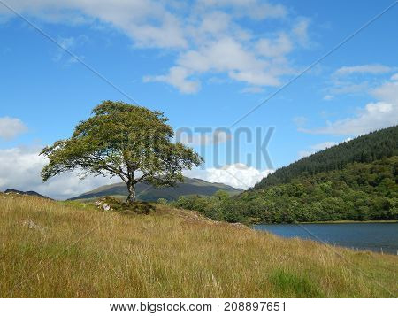 A solitary tree in mountain landscape with blue sky