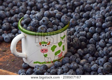 Blueberry, Berries, Blue, Fresh, Ripe, Closeup, Mug, Cup, Enamel, Old, Vintage, Retro, Portion, Reta