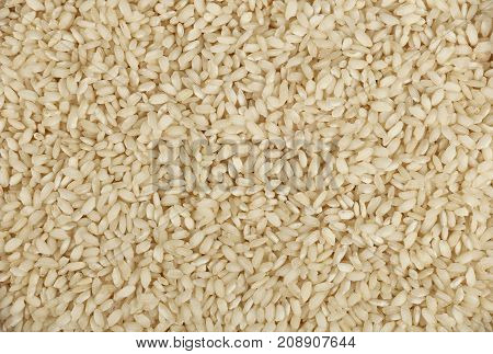 White Arborio Italian Rice Close Up Background