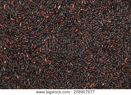 Black Purple Raw Rice Close Up Background