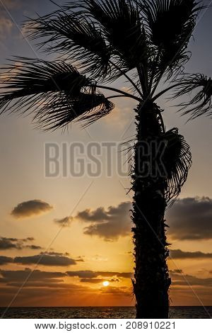 Colorful sunset on the Mediterranean with palm tree in the foreground