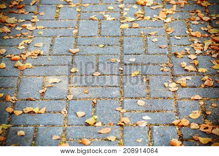 Yellow autumn leaves lying on the street pavement background