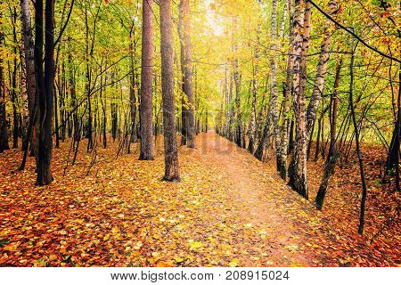Path in the autumn forest at sunny day time..