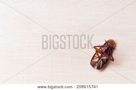 germ concept, A cockroaches die on wooden boards