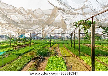 Vegetable Village Farm In Hoi An, Vietnam