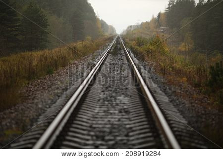 Railway linen among the forest in autumn