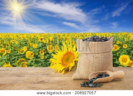 sunflower seeds in burlap bag, fresh sunflower, scoop with seeds on wooden table with natural background. Blooming sunflower field with blue sky and sun. Agriculture and harvest concept